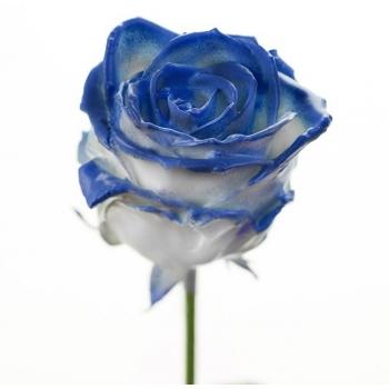 Boeket van grootbloemige wax Rozen wit met blauwe blos