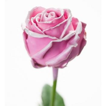 Boeket van grootbloemige wax Rozen roze met blos wit