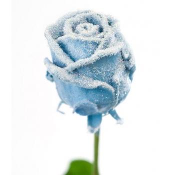 Boeket van grootbloemige wax Rozen licht blauw met sneeuw