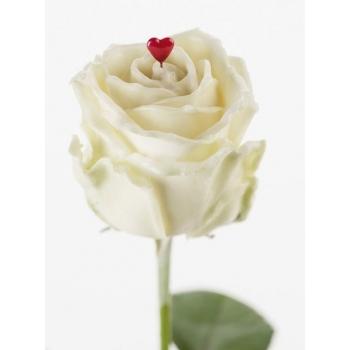 Boeket van grootbloemige witte wax Rozen met rood hartje