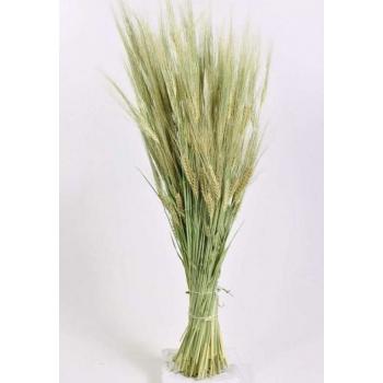 Gedroogde Gerst naturel (Barley)