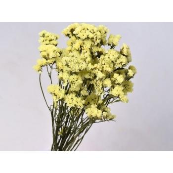 Gedroogde Statice Limonium geel