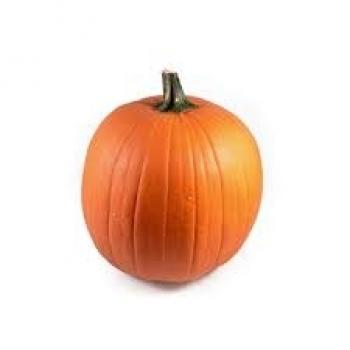 Sierfruit Cucumis oranje Maxima Halloween