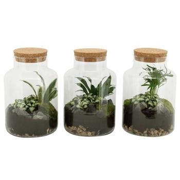 Terranium van plantjes in een glas met kurk