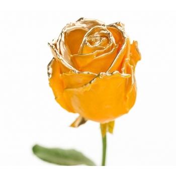 Boeket van grootbloemige wax Rozen oker met gouden blos