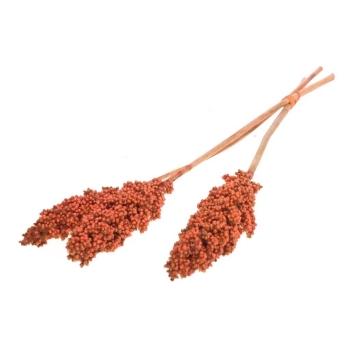 Indian corn burnt oranje gedroogd