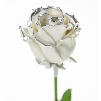 Boeket van grootbloemige wax Rozen wit met zilveren blos