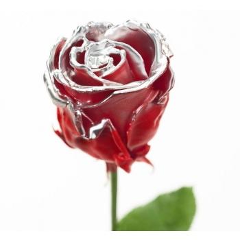 Boeket van grootbloemige wax Rozen rood met zilveren blos