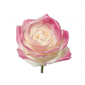 Boeket van witte grootbloemige Rozen met roze blos