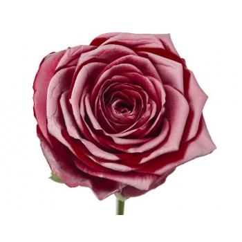 Boeket van rode grootbloemige Rozen met roze blos