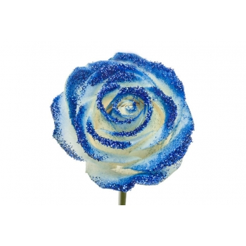 Boeket van witte grootbloemige Rozen met blauwe glitters