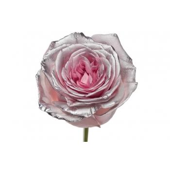 Boeket van roze grootbloemige Rozen met zilveren blos