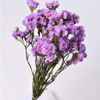 Gedroogde Statice licht lila