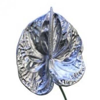 5 zilverkleurige Anthurium