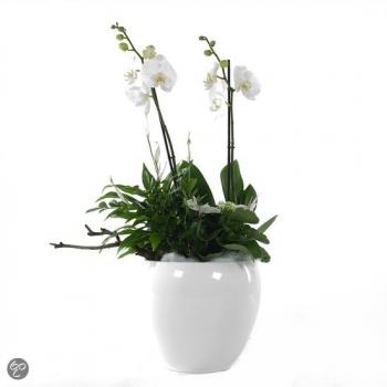 Phalaenopsis arrangement in keramiek Rian wit