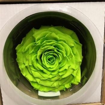 Geconserveerde groene Roos in een cadeaubox