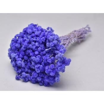 Gedroogde Helichrysum Immortelle lavendel
