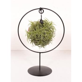Tillandsia groen in een design ring op voet