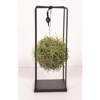 Tillandsia groen in een metalen frame op voet