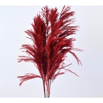 Pampasgras rood gedroogd