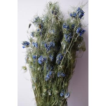 Gedroogde Nigella Flower blue lengte 45 cm