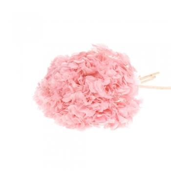 Hortensia roze (Hydrangea) gepreserveerd