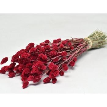 Gedroogde Phalaris gekleurd rood