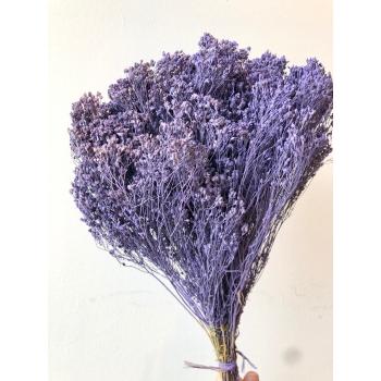 Gedroogde Broom bloom milka paars