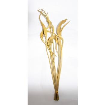 Strelizia blad gedroogd licht geel geverfd