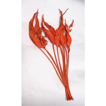 Strelizia blad gedroogd oranje geverfd