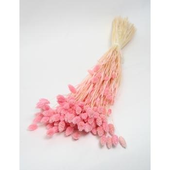 Gedroogde Phalaris gebleekt licht roze