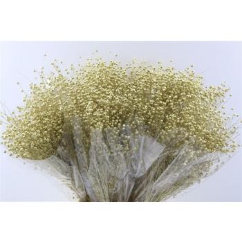 Gedroogde Lino vlas goud 150 gram