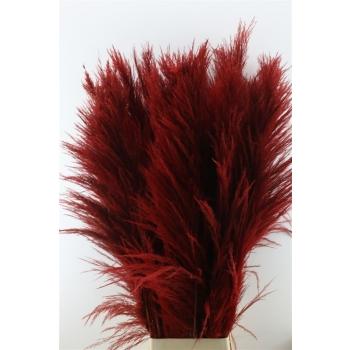 Pampasgras rood goed gevulde pluimen gedroogd