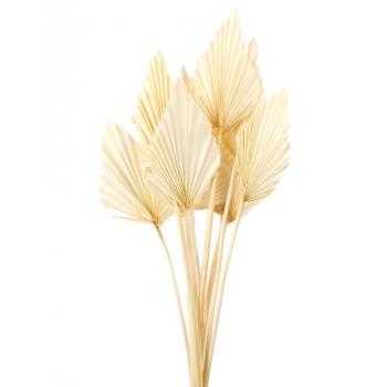 Palm Speer gebleekt