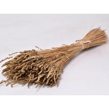 Cat grass bos van 200 gram