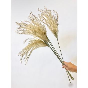 Fluffy Reed gras pluimen naturel