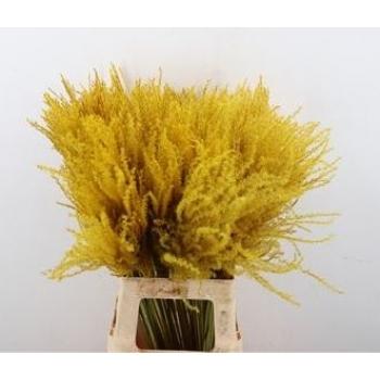 Stipa feather pluimen geel