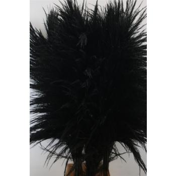 Pampasgras zwart goed gevulde pluimen gedroogd