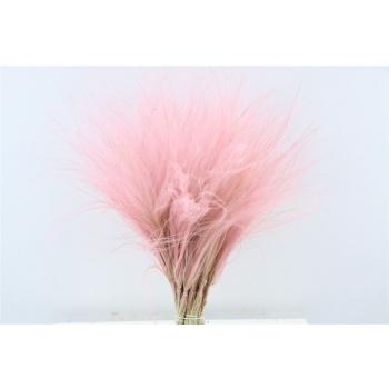 Gedroogde Stipa Pennata roze bosje van 10 toefjes