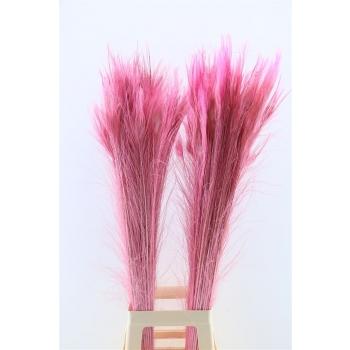 Pauwenveren met oog licht roze lang