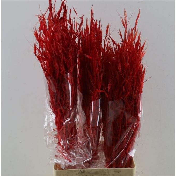 Gedroogde Haver Avena Salvaje gebleekt rood 200 gram