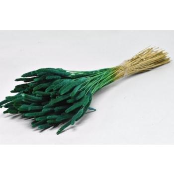 Gedroogde Phleum Pratensis petrol groen 150 gram