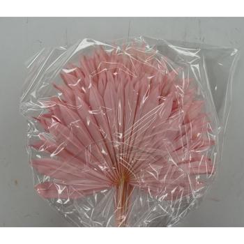 Sun Speer gebleekt licht roze