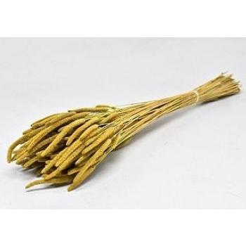 Gedroogde Phleum Pratensis geel 150 gram