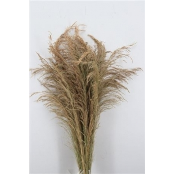 Erba gras gedroogd