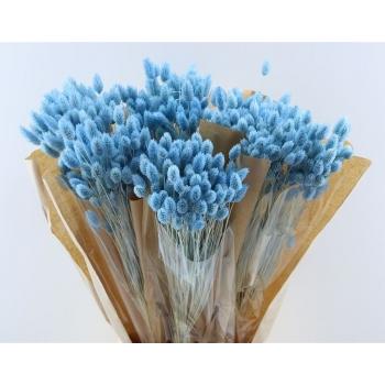 Gedroogde Phalaris gebleekt licht blauw