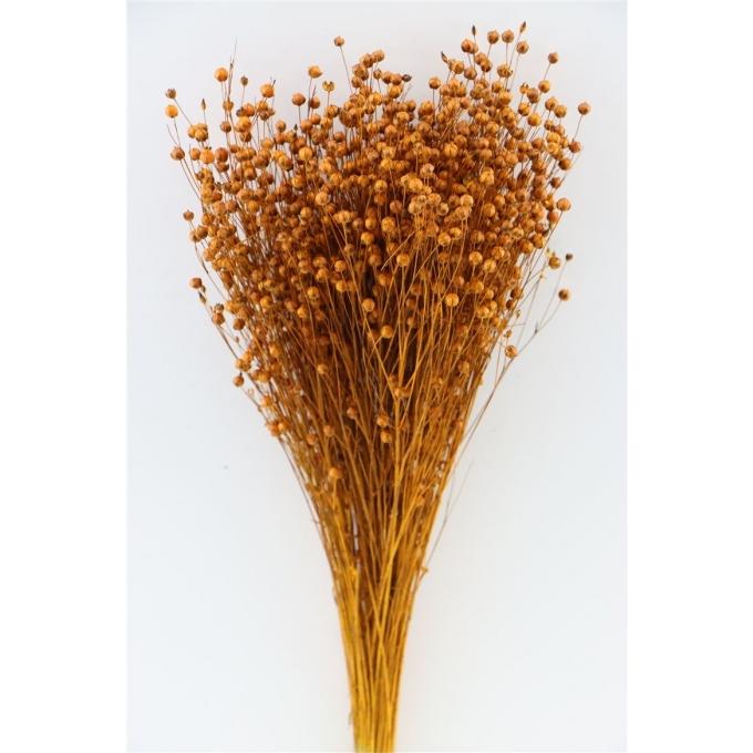 Gedroogde Lino vlas cognac 100 gram