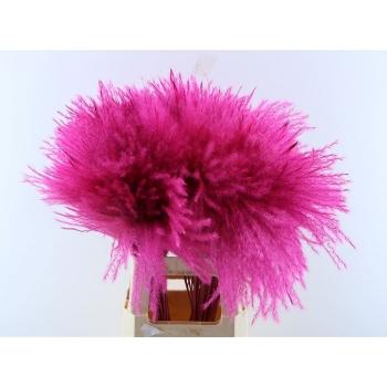 Fluffy Reed gras pluimen cerise
