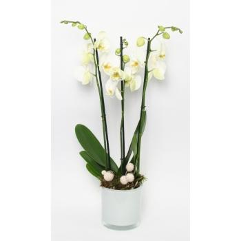Phalaenopsis Orchidee wit 3 takken in een witte glaspot