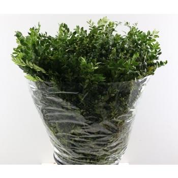 Buxus groen per bos